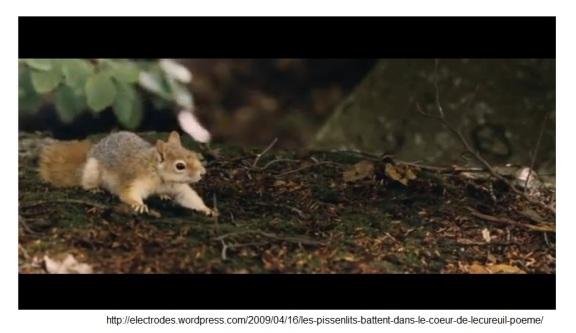 L'Écureuil qu'on voit à 0:27:42 dans le film Le Contrat..