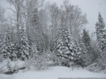 hiver_saint-zenon__re_nelligan_04_couleur